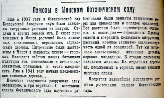 Лимоны в Минском ботаническом саду, «Советская Белоруссия» от 24 января 1945